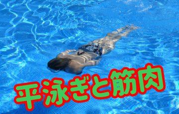 平泳ぎと筋肉